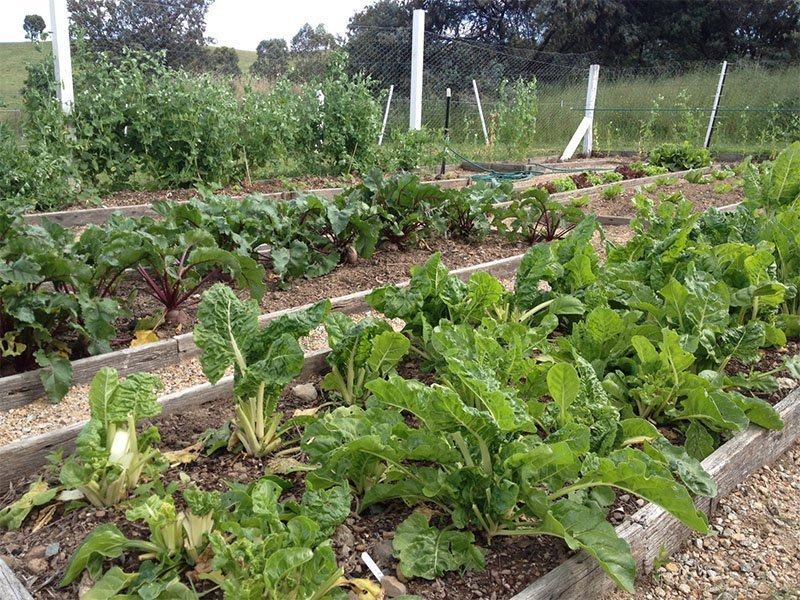 Edible Garden at Circuit Breaker