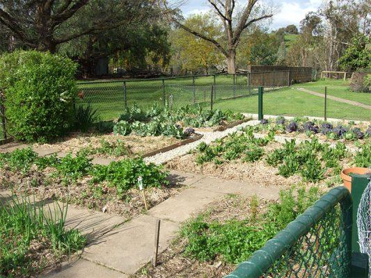 Edible Garden at Circuit Breaker